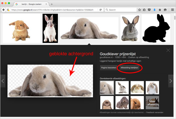 konijn-met-transparante-achtergrond